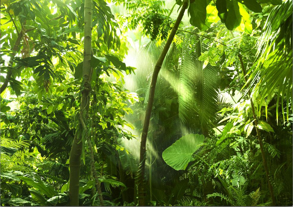 Foto fons Džungļi